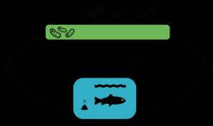 Schéma-cycle aquaponie vu sur aquaponie.net